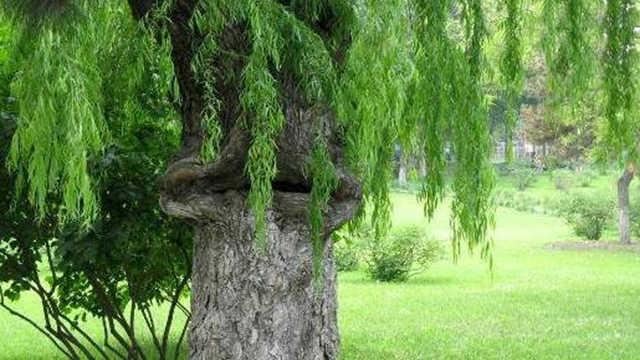 世界上真的存在会吃人的食人树吗?