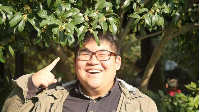 上海哪里的桂花最香?得票最高的是