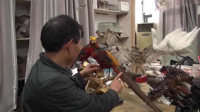 他做动物标本16年:一个耗时半月多