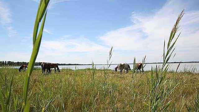 科尔沁:风从草原来
