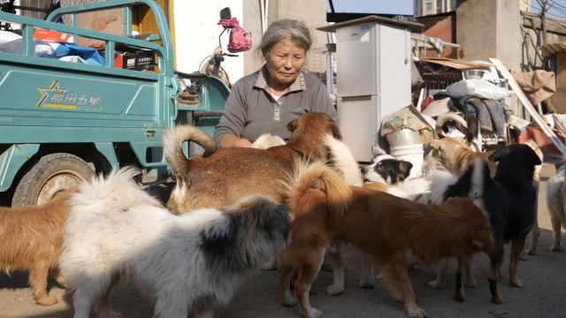 失独老人养257只流浪狗:都是我孩子