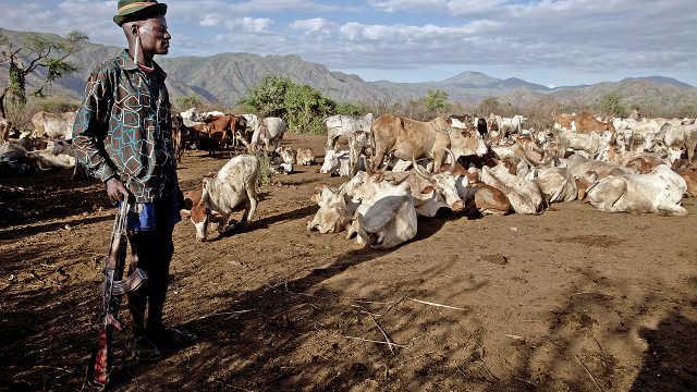 非洲的世外桃源:牛的地位超级高