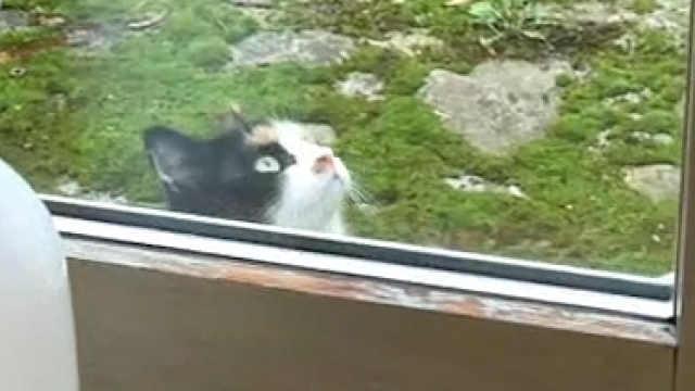 猫猫偷看人类被发现,很尴尬……