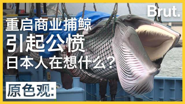 为保传统重启商业捕鲸?日本引公愤