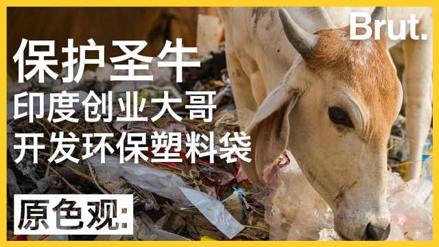 保护圣牛,印度大哥发明环保塑料袋