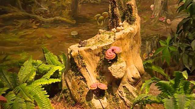 云南人爱吃菌,还建起野生菌博物馆