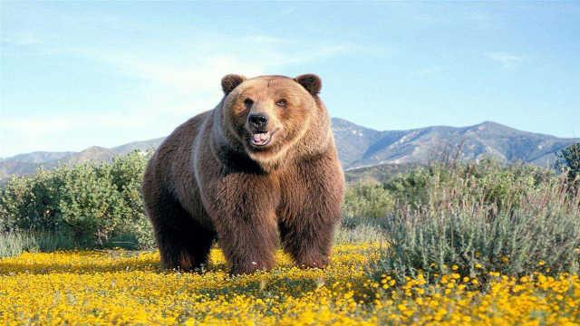 """苹果的""""传播""""竟然有棕熊的功劳?"""