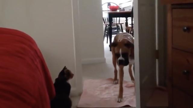 麻麻,这些猫猫好可怕