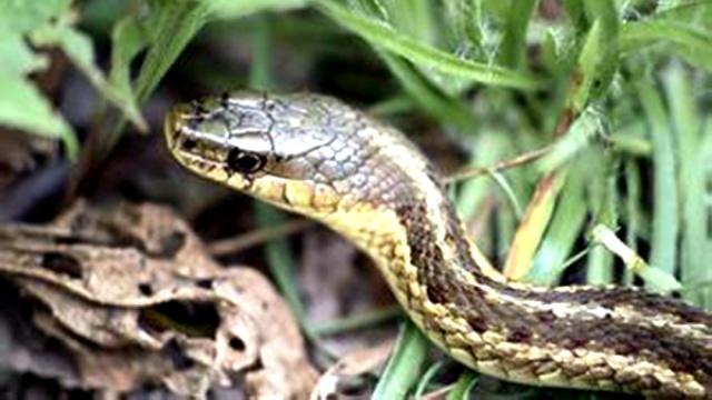 江西一群人在冬眠季节放生数百条蛇