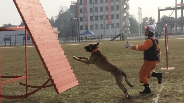 搜救犬20个箱子里找3人,40秒搞定