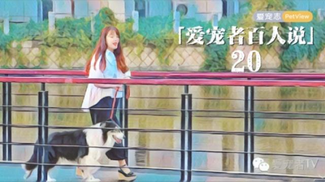 她为狗狗买了张北京到上海的飞机票
