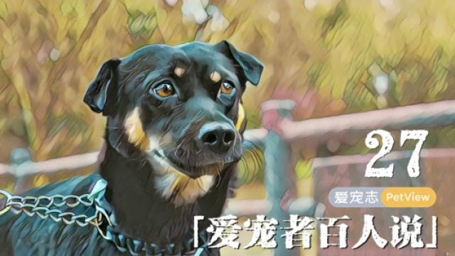 中华田园犬会用自己的一生来爱你