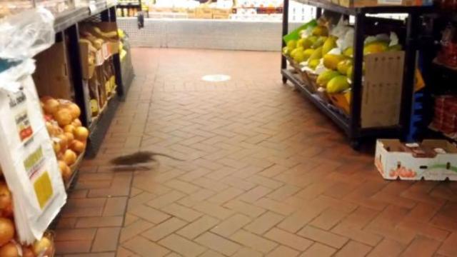 超市货架有只大老鼠,店员懒得清理