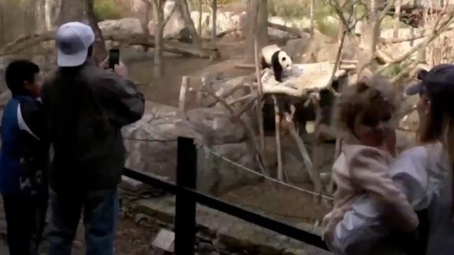 美媒送别熊猫