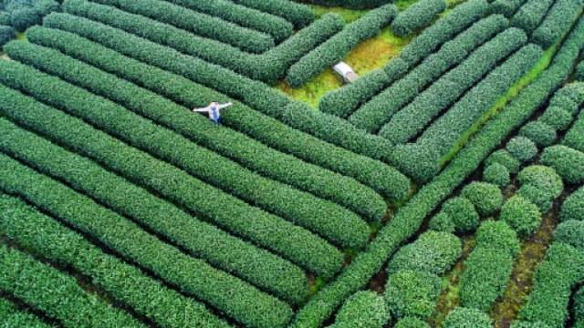 航拍杭州西湖龙井茶园竟然这么可爱
