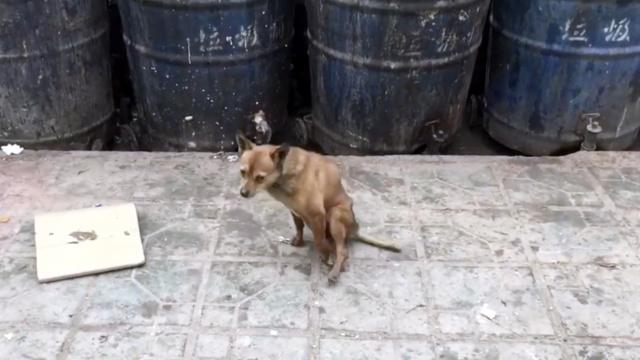 狗坚强!后腿受伤被弃,它拖行流浪