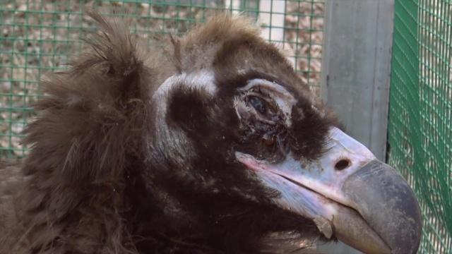 界的天葬:牛死路边,秃鹫啄食_犀牛视频-梨视频 ...