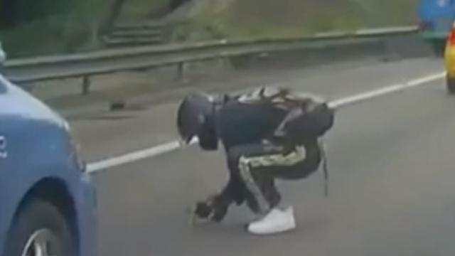 温暖!小猫误闯公路,骑手冒险救起