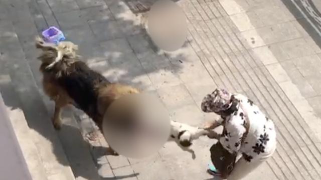 烈性犬挣脱主人控制,当街撕咬小狗