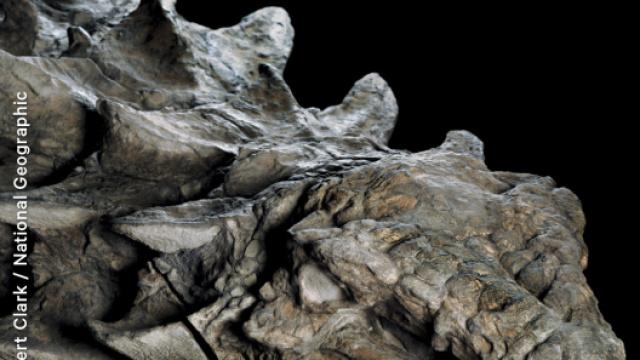 史上保存最完好恐龙化石博物馆展出