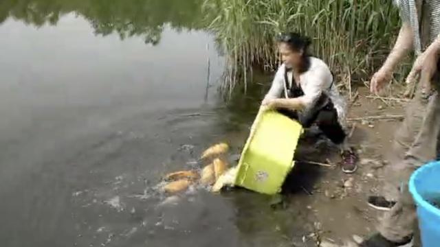 母亲节,他们在母亲河放生万条鱼