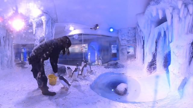 世界上最棒的工作,每天负责喂企鹅