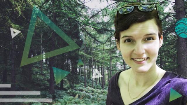 风景总在前方,美国南部森林探险