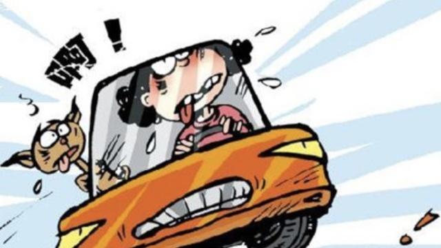 她驾无牌电轿误上高速,怪导航惹祸