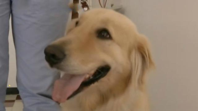 市民支持,扬州首只导盲犬坐上公交
