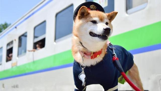 日本动物纷纷出任铁路站长,萌哭了