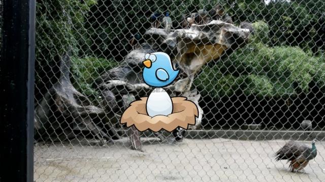 燕雀安知鸿鹄之志!孔雀群里有只鸡