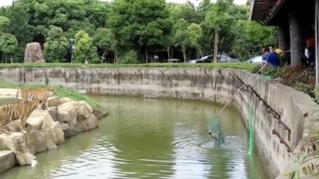 宠物狗跌进淹城