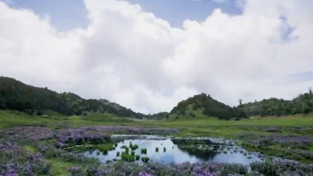 大理漕涧林场:人间仙境,赏花宝地