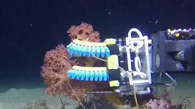哈佛研制深海软体机器人