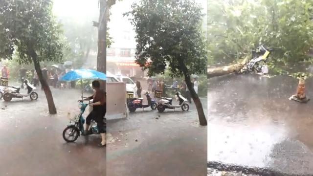 暴风雨刮倒树,外卖小哥送餐被砸死