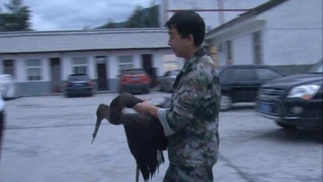 他救回受伤大鸟,竟是鸟中