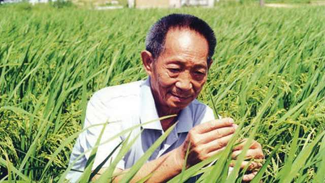 一颗种子改变世界,袁隆平87岁生快