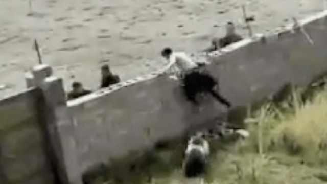 黑熊进村逛,村民欲制服被猛追跳墙