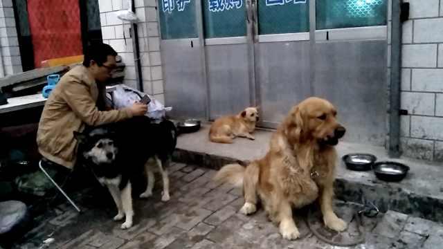 大叔收养2流浪狗,碎语训狗太暖心
