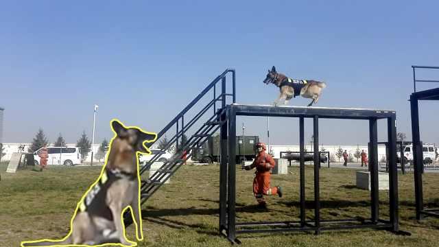 爆笑!搜救犬完胜后,追上对手继续跑