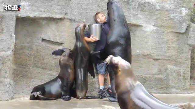 海狮们都会壁咚人了,超羡慕饲养员