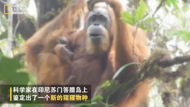 国家地理|发现新类人猿物种
