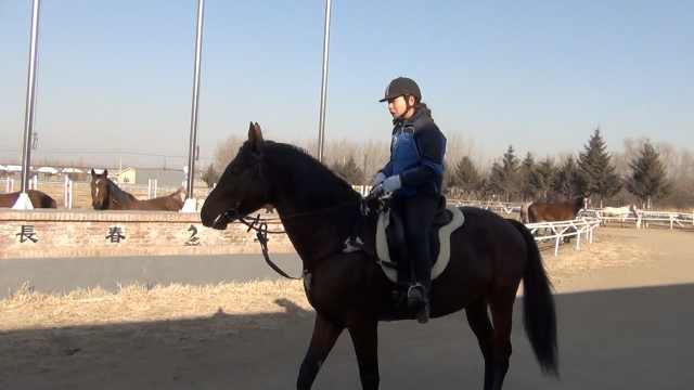女驯马教练的秘技:每天带马见世面