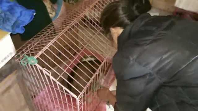 老太救助动物30年,病倒也要喂它们