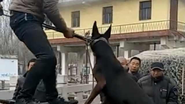 狗狗被狗贩塞笼乱棍打头,叫声凄惨