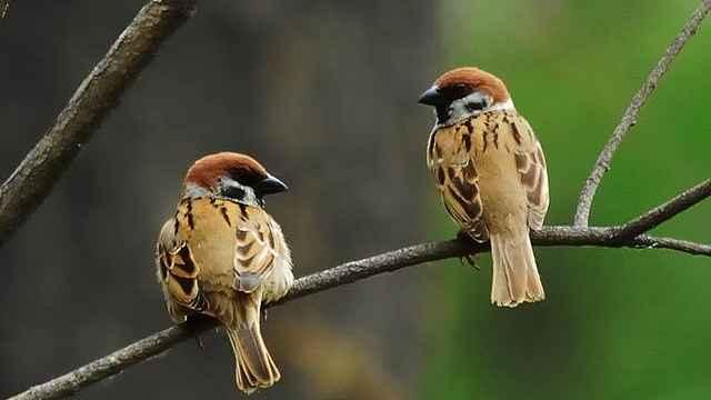 【秒拍大自然】脸上长雀斑的鸟