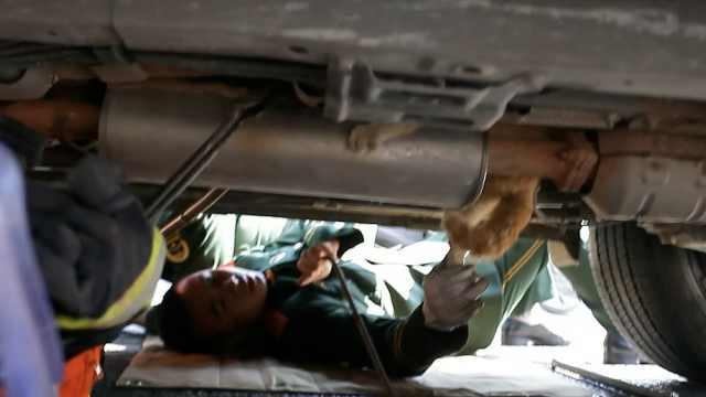 小猫钻进汽车底盘,消防来救它不出