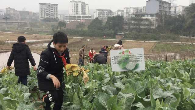 现实开心农场!小学生寒冬菜地除草