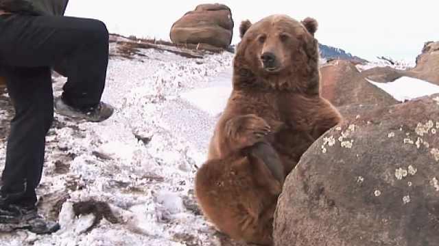 比狗还乖的熊,又想骗我吸熊?