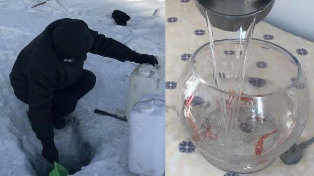 大爷往返2小时凿冰取水,为养活金鱼